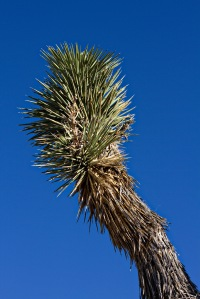 joshuatree.feb.2014-19.low